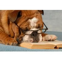 If the Dog Were the Teacher