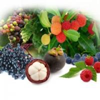 Crack the Unheard Superb : Exotic Wonder Fruits