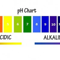 How to Get Your Body's pH Balanced with Acidic and Alkaline Foods